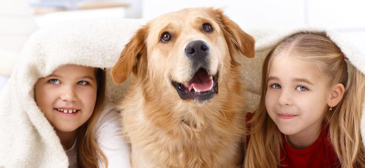 Lista de las mejores mascotas para tener en casa - Perros para tener en casa ...