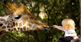 Parques naturales y zoos de España ideales para ir en familia