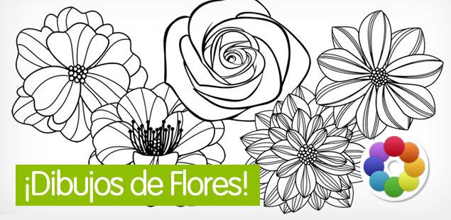Flores - Dibujos