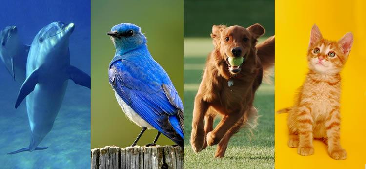 Según tu personalidad, ¿qué animal serías?