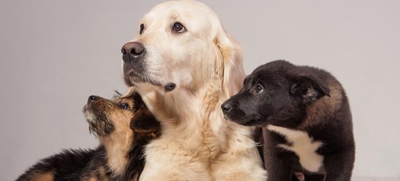 Según tu personalidad, ¿qué raza de perro serías?