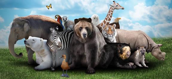 Test de Animales I