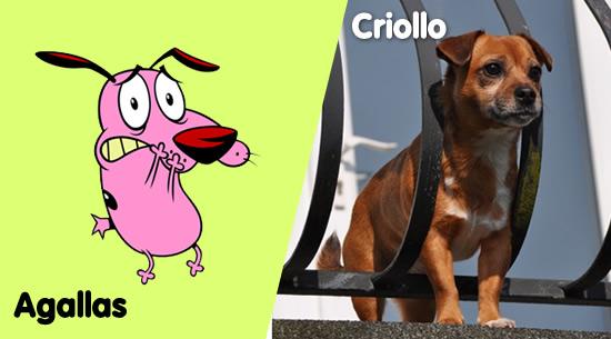 Agallas, el perro cobarde, es un criollo