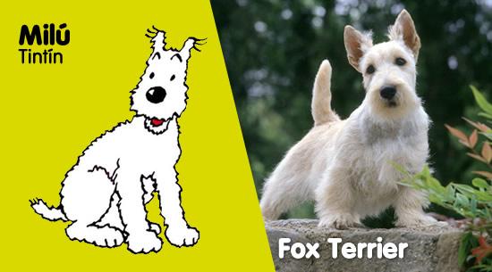 Milú de 'Tintín' es un Fox Terrier