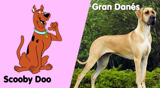 Scooby Doo es un Gran Danés