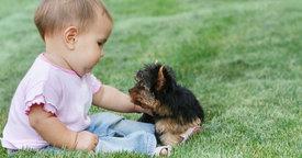 La convivencia del bebé con las mascotas